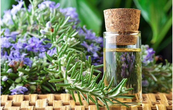 Rosemary Oil: Benefits and Uses